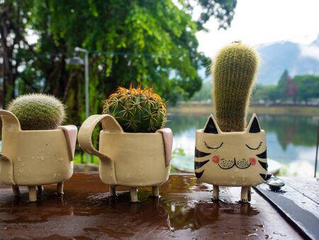 Cactus in colorful ceramic pot