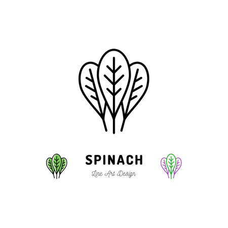 Spinach leaves icon thin line art design.