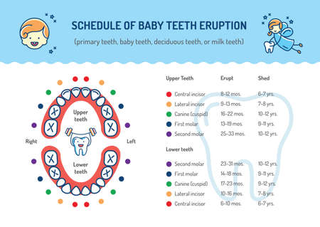 Primary teeth chart mersnoforum primary teeth chart ccuart Images