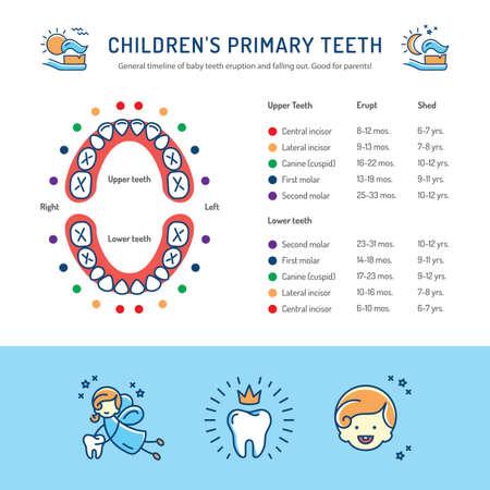 Childrens Primary Teeth, Schedule of Baby Teeth Eruption. Ð¡hildrens dentistry infographics