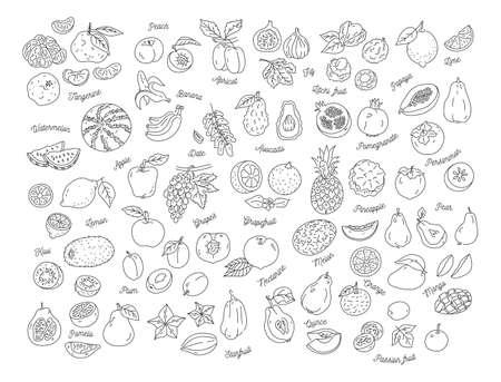 Fruit icon, Hand-drawn set of fruits. Vector illustration Illustration