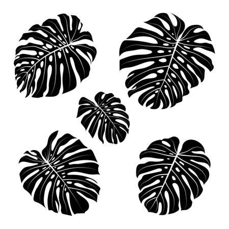 Monstera leaf outline, Black silhouettes tropical monstera leaves. Vector flat illustration Illusztráció