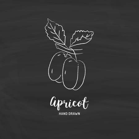 Apricot drawing Vector hand drawn apricots. Sketch of apricots with chalk on a blackboard, Vector isolated icons