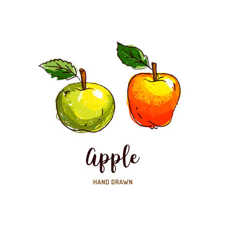 Apple drawing Vector hand drawn apples, Watercolor colorful apples. Vector isolated icons set