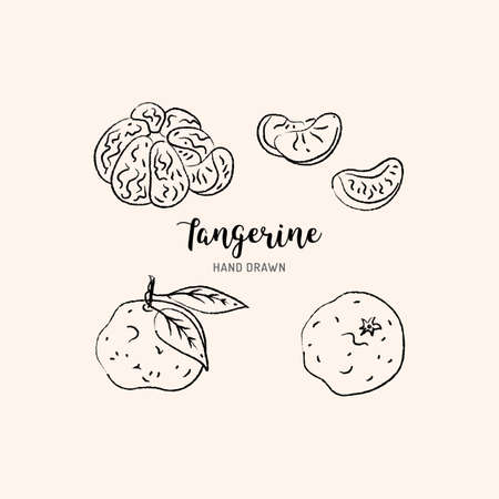 Tangerine drawing Vector hand drawn mandarin. Sketch of tangerines on white background, Vector isolated icons set Illusztráció