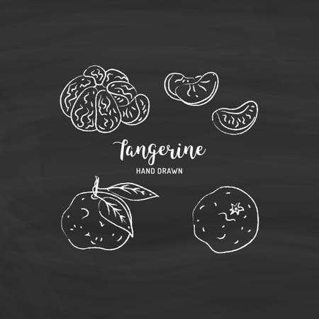 Tangerine fruit drawing Vector hand drawn mandarin. Sketch of tangerines with chalk on a blackboard, Vector isolated icons set Illusztráció