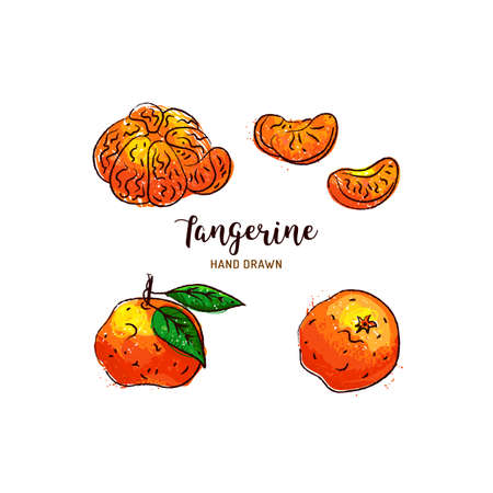 Tangerine drawing Vector hand drawn mandarin, Watercolor colorful tangerines. Vector isolated icons set