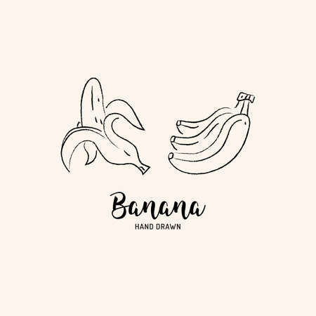 Banana fruit drawing Vector hand drawn bananas. Sketch of bananas on white background, Vector isolated icons set