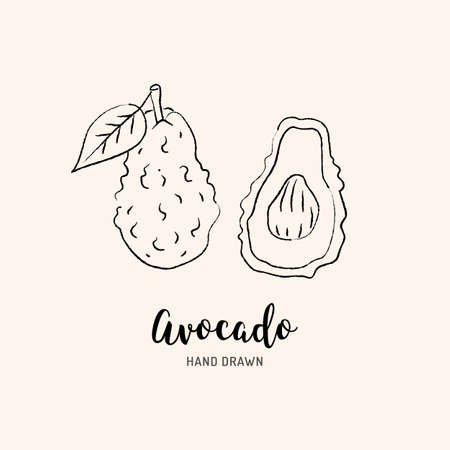 Avocado drawing Vector hand drawn avocado. Sketch of avocado on white background, Vector isolated icons set