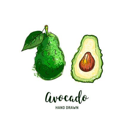 Avocado drawing Vector hand drawn avocados, Watercolor colorful avocados. Vector isolated icons set