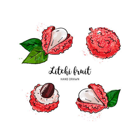 Litchi fruit drawing, Lychee. Watercolor litchi on a white background. Vector isolated illustration Illustration
