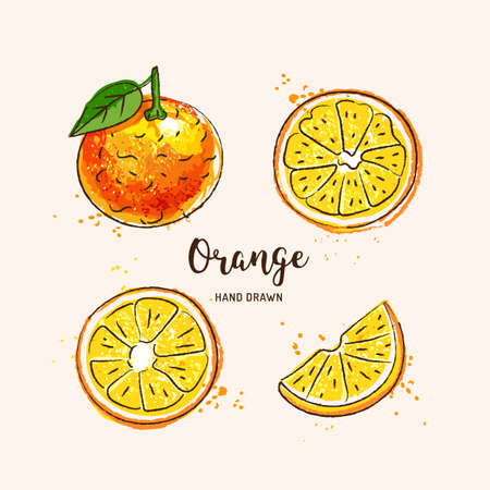 Orange fruit drawing, orange slices. Watercolor oranges on a white background. Vector illustration