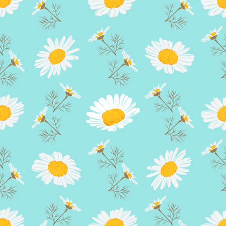 Daisy seamless pattern, Chamomile background. Blooming daisies on a gentle turquoise background. Vector pattern