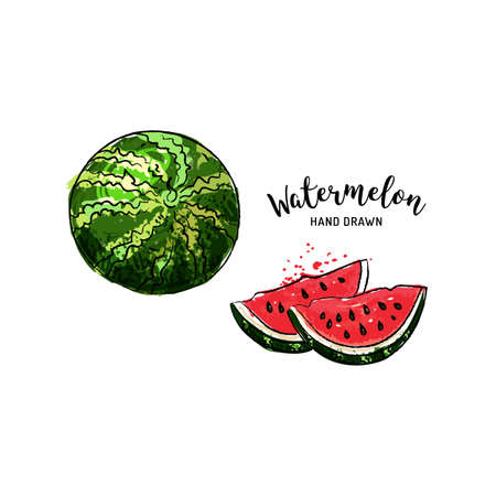 Watermelon fruit graphic drawing. Watercolor watermelon on a white background. Vector illustration