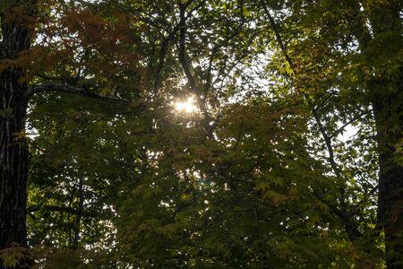 Sunbeams through gaps in tree leaves