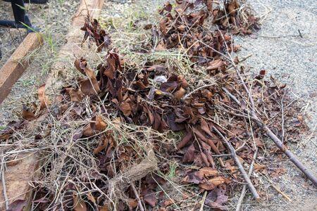 Garbage of brown dead leaves collected Reklamní fotografie