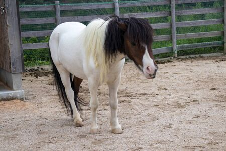 Pony with white and black pattern