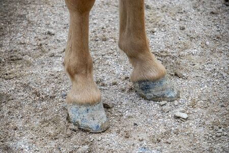 Brown and black pony feet