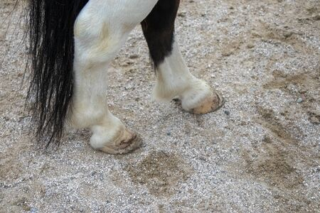 Black and white pony feet