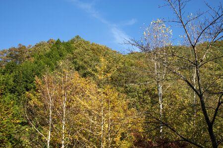Autumn scenery of Japanese mountains Reklamní fotografie