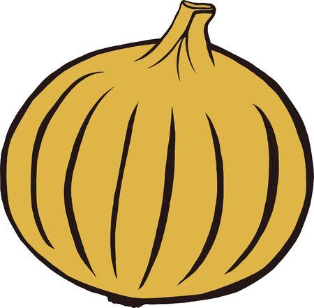 Vector illustration of brown onion Ilustrace