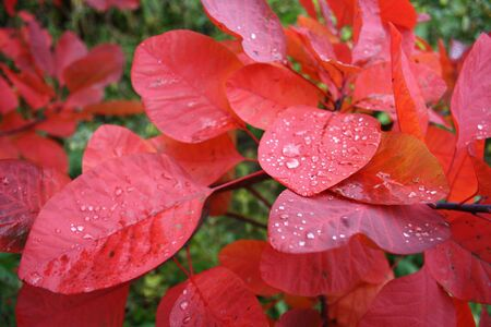 rainfall: Close-up of autumn leaves after rainfall