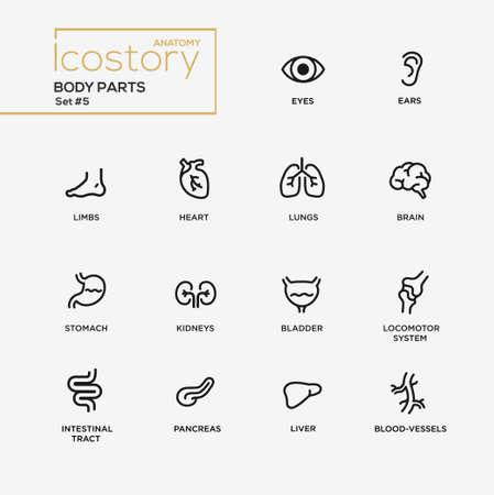 Conjunto de partes del cuerpo vector modernos iconos de diseño de líneas finas llanura simples y pictogramas. Cuerpo, partes internas del cuerpo, cerebro, vejiga, hígado, estómago, riñones, sistema locomotor, tracto intestinal, páncreas