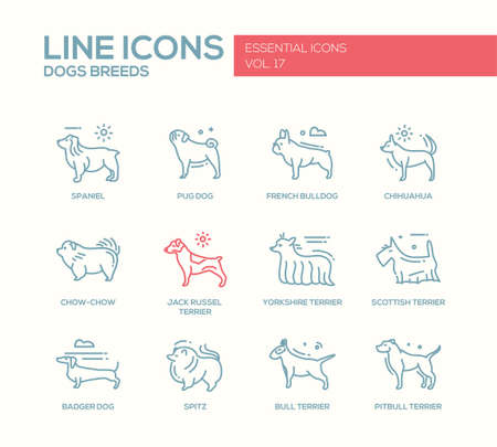 Set of modern vector plain line design icons and pictograms of domestic dogs breeds. Spaniel, french bulldog, chihuahua, chow-chow, jack russel terrier, yorkshire, scottish terrier, badger, spitz, pitbull Illustration