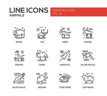 ballena azul: Animals - set of modern vector plain line design icons and pictograms of animals. Bison, yak, deer, moose, giraffe, camel, narwhal, killer whale, blue whale, beaver porcupine capybara