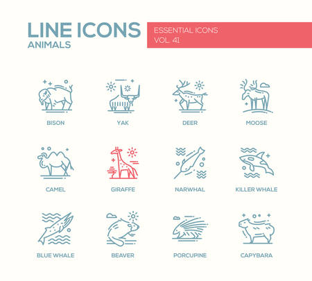 killer whale: Animals - set of modern vector plain line design icons and pictograms of animals. Bison, yak, deer, moose, giraffe, camel, narwhal, killer whale, blue whale, beaver porcupine capybara