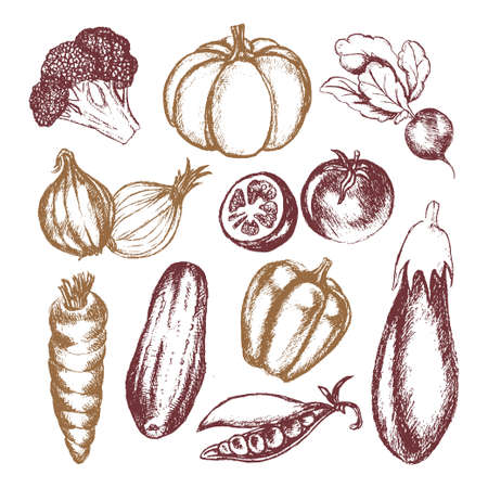 Vegetables - colored hand drawn illustrative composition.