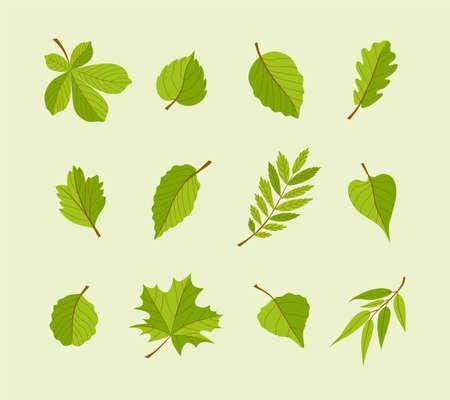 Types of Leaves - modern vector flat design icons set. Illustration