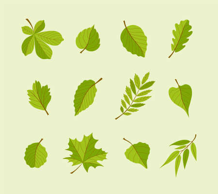 Types of Leaves - modern vector flat design icons set. Ilustrace