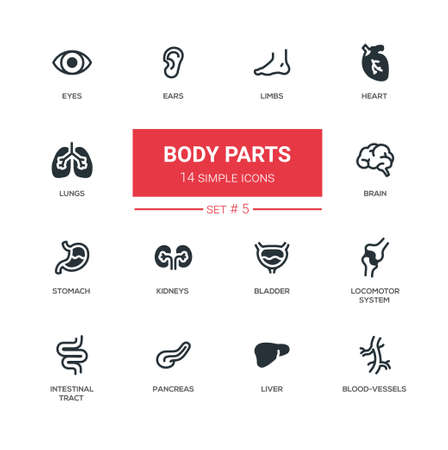 Body parts - Modern simple thin line design icons, pictograms set