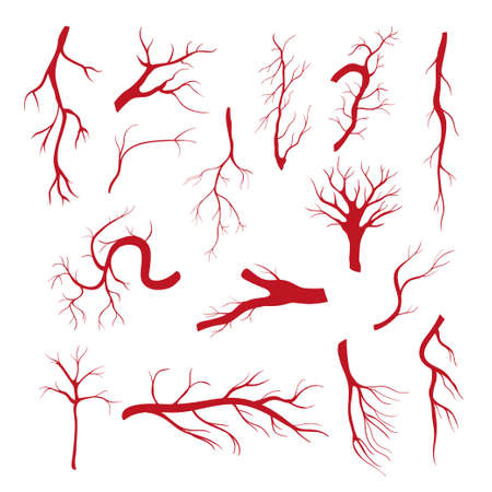 Set of blood vessels - modern vector isolated clip art 일러스트