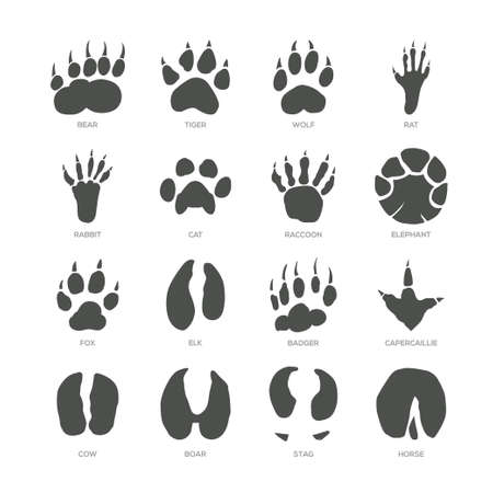 Animal trails - modern isolated vector set on white background with description. Bear, tiger, wolf, rat, rabbit, cat, racoon, elephant, fox, elk, badger, capercaillie, cow, boar, stag, horse footprint