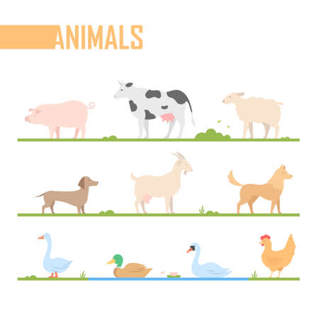 Set of farm animals - modern vector cartoon isolated illustration on white background. A pig, cow, goat, duck, sheep, dogs, goose, swan, chicken. Perfect as visual aid, poster, sticker