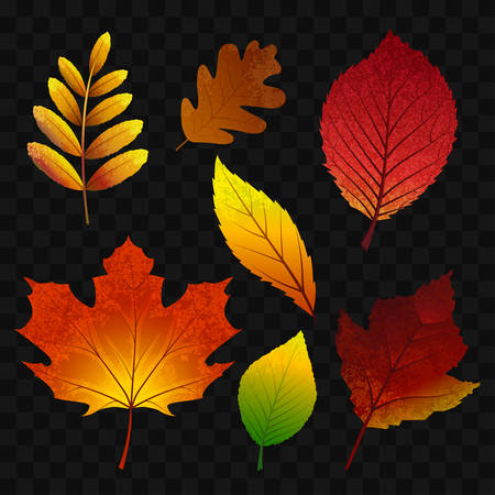 Autumn leaves - modern realistic isolated clip art on transparent illustration.