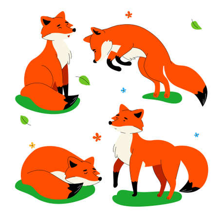 Cute red fox - flat design style set of characters isolated on white background. A collection with a lovely wild animal in different positions, jumping, sleeping, standing, sitting