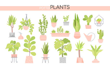Potted plants collection - set of vector elements