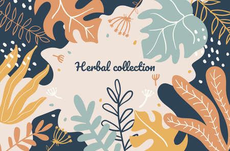 Abstract foliage, plant leaves flat vector illustration. Herbal collection banner template. Beautiful scandinavian style background design. Natural herbs shop poster concept with calligraphy