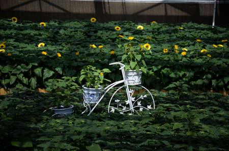 floats: Sunflower floats