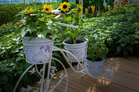 bourgeoisie: Sunflower with garden bike