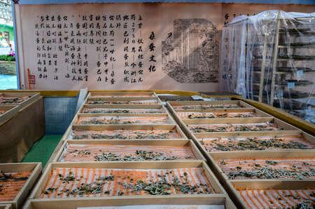 silkworm: Silkworm story Editorial