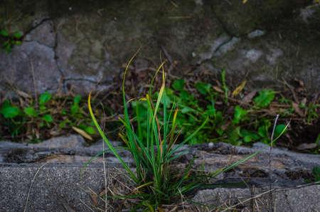 Grass growing out between rocks