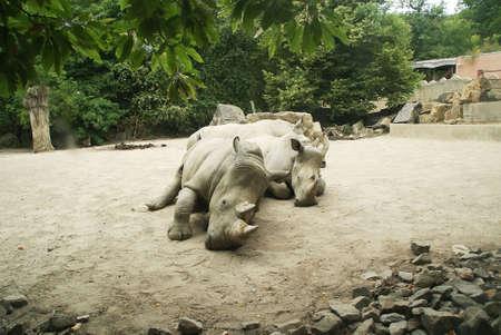 Rhinos photo