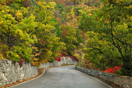 Autumn vertical landscape. The road through the forest, asphalt, stone fence. On both sides of the road deciduous trees. Thick yellow, red and green foliage. The leaves fall off. Gloomy overcast autumn day. Fog in the mountains. Straight mountain road lea Stock Photo