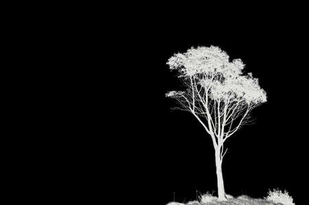 Photo inverted enhanced lone tree in black and white with copy space. Stock Photo