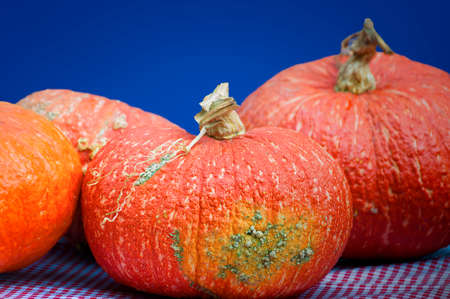 Big orange pumpkins sit on a red and white checkered table cloth.