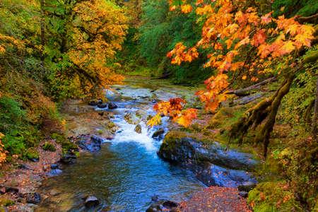 Herfstkleuren komen tot leven langs de South Santiam River in Cascade Mountain Range in Oregon. Een lichte regenval verlicht de rijke warme kleuren in deze schilderachtige landschapsfoto. Stockfoto